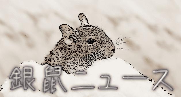 銀鼠ニュース